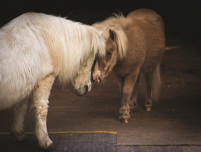 dorset equine rescue vermont