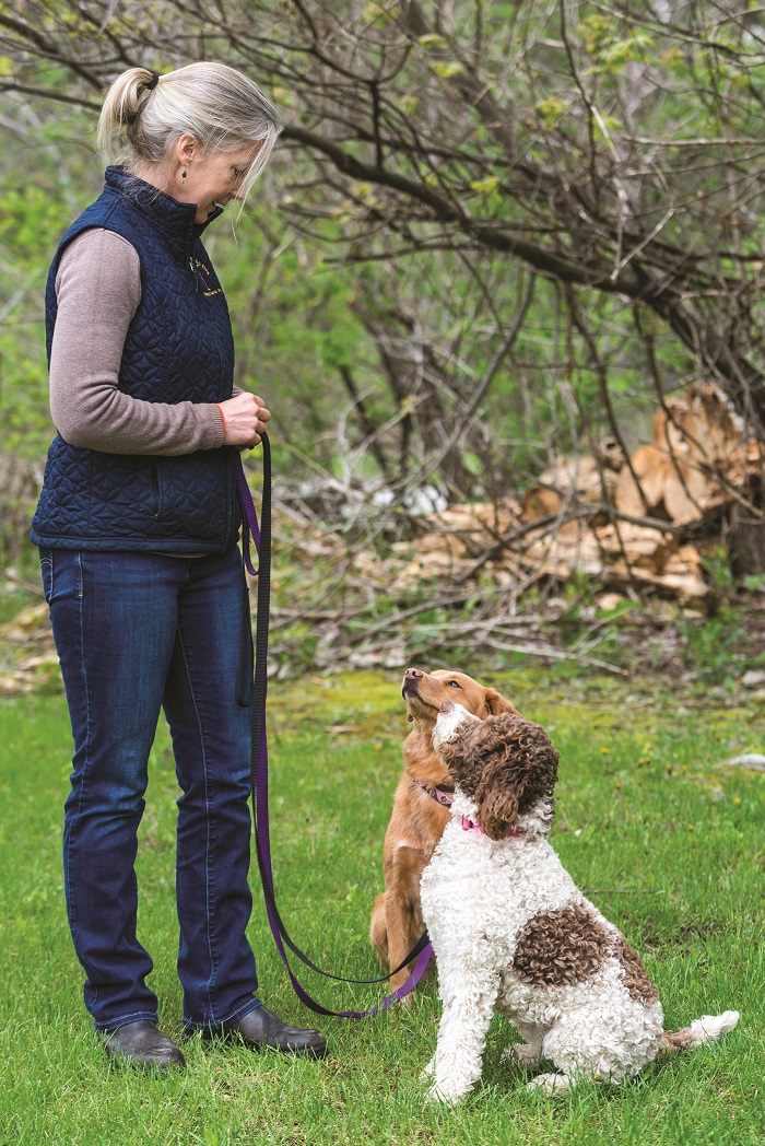 dog training at grateful dog manchester vermont